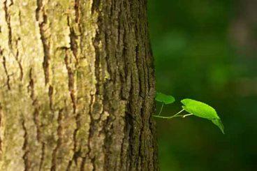 <b>Riduzione consumi carta: le foreste ringraziano</b>